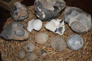 seeigel fossil