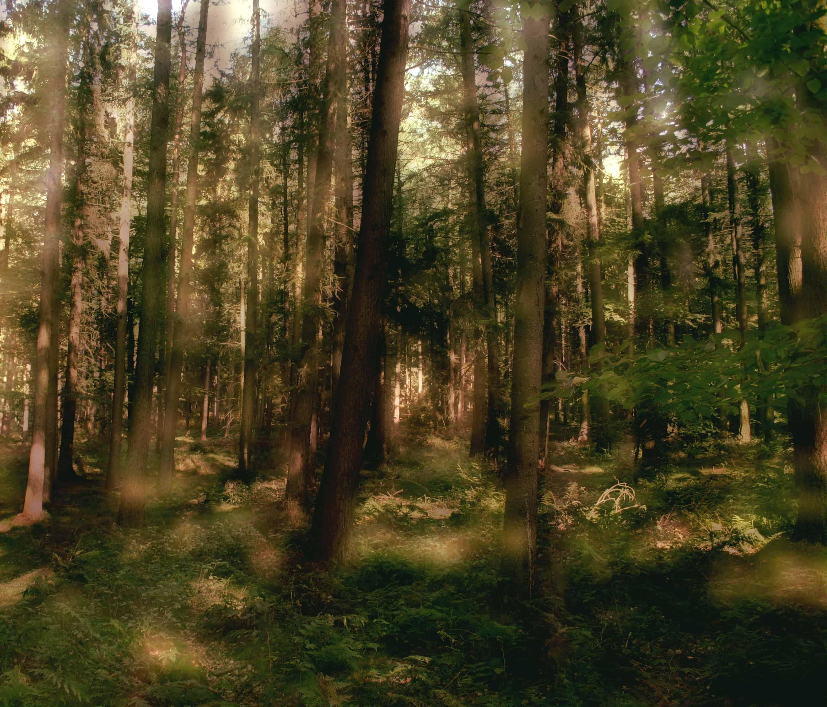 druidenwald heiliger hain