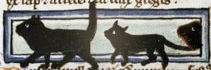 three cats walk in a single