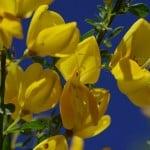 flower-116249_640