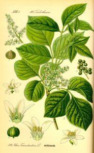 giftsumach