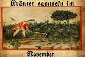artikel_kräuter_november