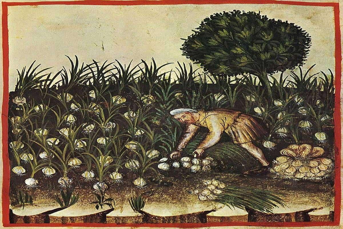 kräutersammelkalender juli