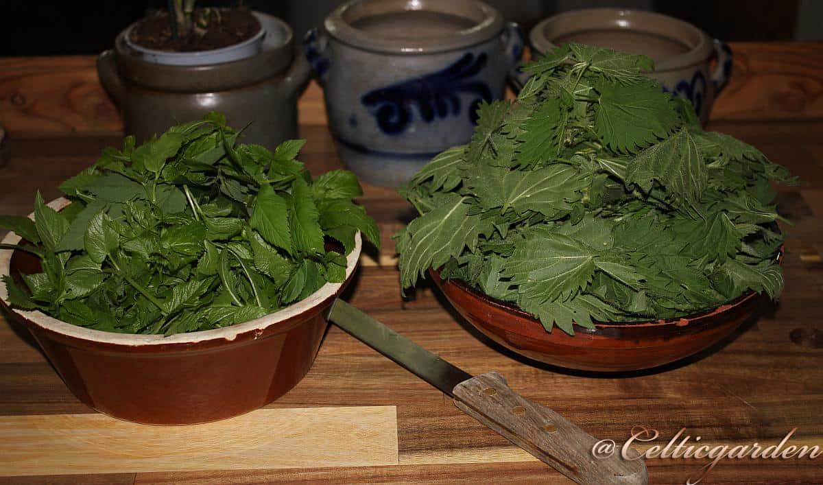 Brennessel Giersch Gemüse